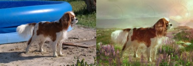 An example of stylization of an animal`s photo - dog`s photo